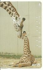 RARE / CARTE TELEPHONIQUE JAPON - GIRAFE ET GIRAFON / PHONECARD JAPAN