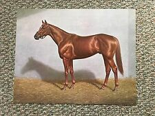 Affirmed Photo from oil painting Horse Racing 1978 Kentucky Derby