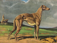 GREYHOUND CHARMING DOG GREETINGS NOTE CARD BEAUTIFUL STANDING DOG IN RURAL SCENE