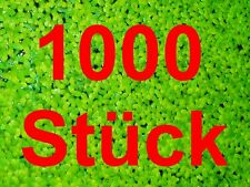 ** Lenti D'ACQUA ** 10x10cm Lemna schwimmpflanze alghe Killer acquari pianta laghetto