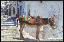 585011 Donkey Fira Santorini Greece A4 Photo Print