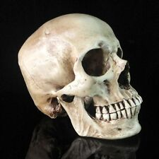 Wholesale! White Human Skull Replica Resin Model Medical Lifesize Realistic 1:1