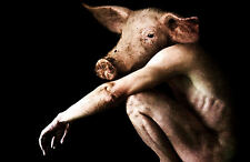 Encadrée Imprimer-Bizarre l'homme nu avec une tête de porc (Photo Poster animal art)
