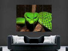GREEN PIT VIPER SNAKE NATURE  GIANT WALL POSTER ART PICTURE PRINT LARGE HUGE