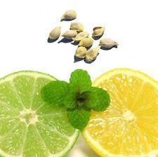 10Pcs Rare Lemon Tree Indoor Outdoor Available Heirloom Fruit Seeds Garden W87