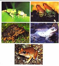 9 Slovakia Pocket Calendars Nature Animals FROGS Zdeněk Štěpánek, Germany #B19