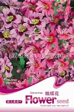 1 Bag 30 Seeds Schizanthus Pinnatus Flower Seed A037