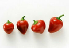 Heirloom 200 Seeds Hot Cherry Bomb Peppers Pepper Chili Large Red Vegetable