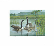VERMONT #4 1989 STATE DUCK STAMP PRINT CANADA GEESE by Jim Killen