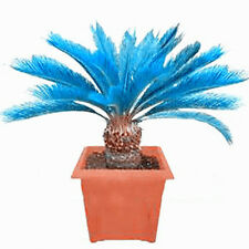 100Pc Blue Cycad Seeds Sago Palm Tree Seeds Bonsai Home Garden Decor Set