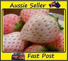 Pink Strawberry Seeds Potted Garden Court Yard 100 seeds