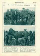 1917 British Front Fighting Mud Rescued Pack Animal