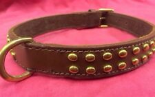 Dog collar BROWN, BRASS STUDS 20 inch long X 1 staffordshire Bull Terrier