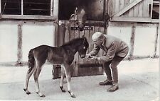 UK Farnham Surrey - Colt Foal and its Mother 1953 used real photo postcard