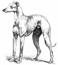 The Greyhound by Fullerton 1892, 7x5 inch Photographic Reprint