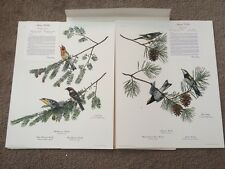 Ray Harm Spring Warblers Prints Signed