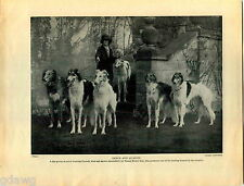 1930 Book Plate Print Borzoi Ernest Henry Guy Peggy O'Neill Wolfhound Russian