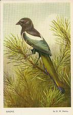 BIRD : Magpie -D.M.HENRY-VALENTINE'S