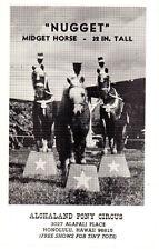 NUGGET Miniature Horse POSTCARD Alohaland Pony Circus Honolulu HAWAII