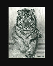 Tiger siberian tiger amur tiger drawing from artist art Image picture