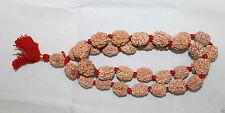 Certified 3 Mukhi Rudraksha / Three Face Rudraksh Kantha Mala - 32+1 beads