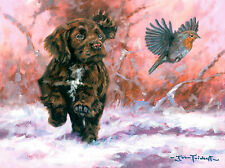 Chocolate Cocker Pup Dog, Christmas cards pack of 10 byJohn Trickett C478X