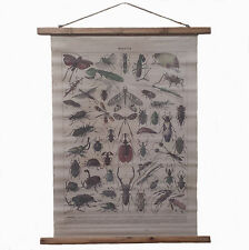 INSECTS, INSECTES Antique, Retro style Large Scroll, wall hanging - 103cm x 82cm