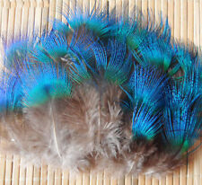 50 pc beautiful Peacock feather neck feather 1- 2 Inch Long /Costume/Millinery