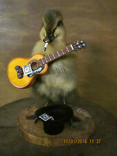 Taxidermy Duckling*Mr Busker Duck*Gift*Musician*Street Performer*UK