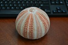 ORANGE ENGLISH CORNISH CHANNELS SEA URCHINS SEA SHELL BEACH WEDDING NAUTICAL