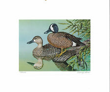 MISSOURI #5 1983 STATE DUCK  STAMP PRINT BLUE WINGED TEAL  Doug Ross NO STAMP