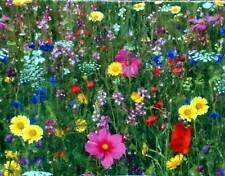 Prairie de fleurs graines