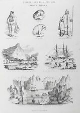 OLD ANTIQUE PRINT ARCTIC ESKIMO ESQUIMAX EXPLORING MELVILLE BAY c1880s ENGRAVING