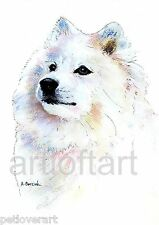 SAMOYED #2  DOG ACEO Card Print by A Borcuk