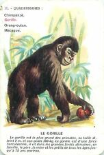 Gorille Gorilla  Singe Monkey PLAYING CARD CARTE A JOUER OLD ANCIEN