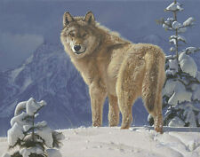 """Cold Stare"" Daniel Smith Western Fine Art Smallwork Giclee Canvas - Wolf"