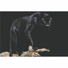 BLACK PANTHER POSTER - 24x36 SHRINK WRAPPED - NATURE 3639