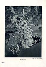 Christbaum Licht bild von A. Steiner, St. Moritz Histor.- Foto- Kunstdruck 1927