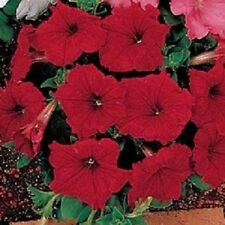 50 Pelleted Petunia Celebrity Red FLOWER SEEDS