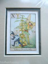 CICELY MARY BARKER - Yellow Deadnettle Flower Fairy Vintage Double Mounted Print