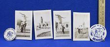 Vintage Paul Bunyan & Babe The Blue Ox Souvenirs Bemidji MN Photos & Pins 6 Lot