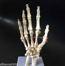 1:1 New Hand Joint Anatomical Skeleton Model Human Medical Anatomy Life Size