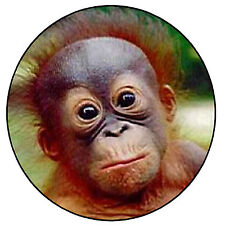 BABY ORANGUTAN - FRIDGE MAGNET, KEYRING OR BADGE - NEW