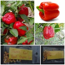 Sweet Red Bell Pepper ~25 Top Quality Seeds - Ideal to be Stuffed!