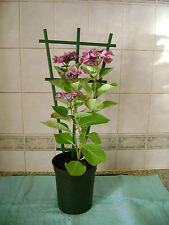 3 X CLIP ON PLASTIC PLANT POT  TRELLIS / SUPPORT FOR CLIMBING PLANTS