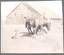 VINTAGE 1938 HOLLYWOOD CALIFORNIA ANIMAL MAN TRAINER HORSES DOGS OLD PHOTO