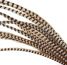 "5 Pcs REEVES PHEASANT Natural Feathers 4-10""; Craft/PadS/Hats/Halloween/Bridal"