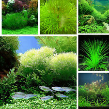 1000X Aquarium Fish Tank Mix Grass Seeds Water Aquatic Plant Hydrophyte Seed HOT