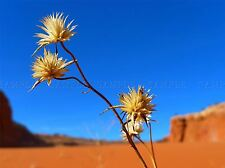FLOWERS NATURE PLANT FLOWER DESERT LANDSCAPE YELLOW POSTER ART PRINT BB4705A
