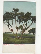 Egypt Indigenes Sur Les Palmiers Vintage Postcard 112b